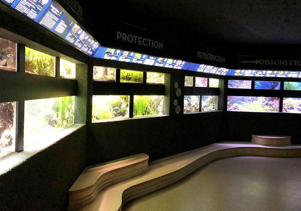 mathilde_meignan_aquarium_porte_dorée_permanent_parcours_3