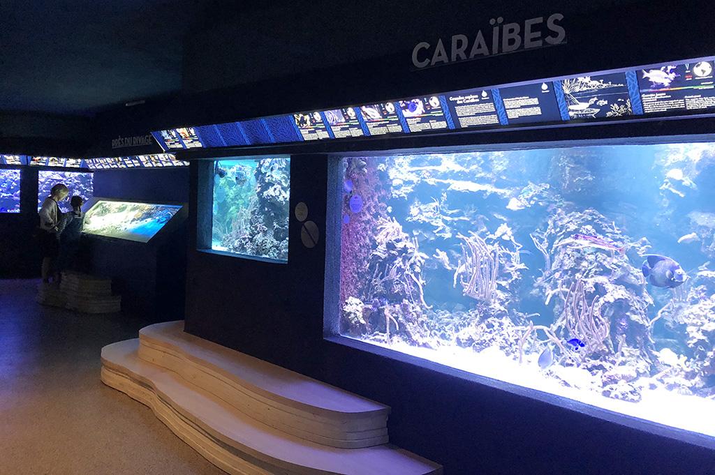 mathilde_meignan_aquarium_porte_dorée_permanent_parcours_5